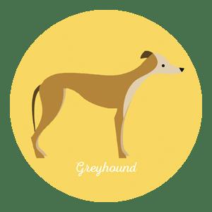 Hundkapplöpning Greyhound