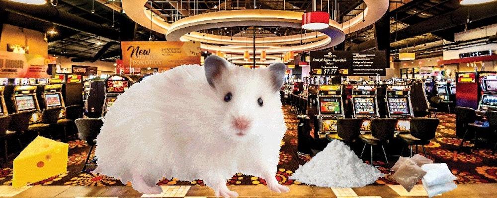 Råttor höga på kokain tar dåliga beslut när de spelar casino